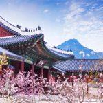 Du lịch Hàn Quốc, thưởng lãm hoa anh đào cùng Shinhan và Klook