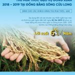 VietinBank cho vay thu mua thóc gạo với lãi suất ưu đãi từ 6%